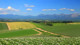 Blooming potato fields, Mount Taisetsuzan, and the Tokachi mountain range Footage