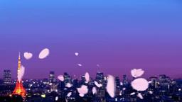 東京の夜景に舞う桜吹雪 Footage