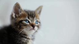 前を見つめる猫 Footage