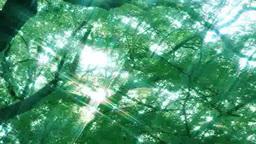 Sunlight filtering through trees Footage