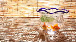 Goldfish in a fishbowl Footage