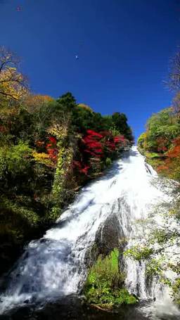 Blue sky and Waterfall and autumn leaves Footage