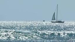 ハワイワイキキビーチのヨット Footage