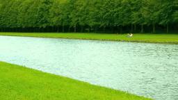 水と緑の並木 Footage