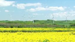 風力発電と菜の花 Footage