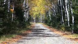 池の湯林道の秋 Footage