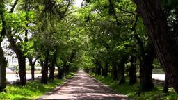 松前藩戸切地陣屋跡の桜(新緑)のトンネル Footage