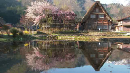 白川郷の桜と合掌民家 影片素材