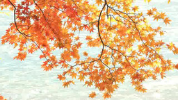 揺れる紅葉と中禅寺湖のさざ波 Footage
