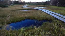 秋の栂池自然園の遊歩道と池塘 Footage