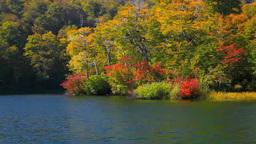 鎌池の紅葉とさざ波 Footage