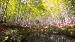 秋のブナ林の池 Footage