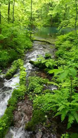 沸壺の池と渓流 Footage