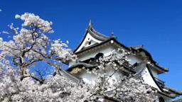 彦根城とサクラ Footage