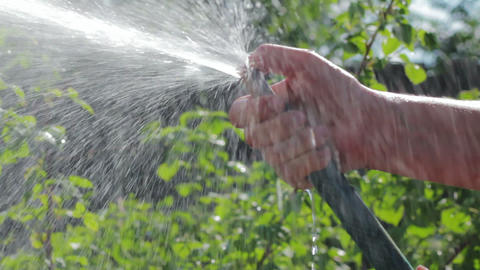 Female hand with a hose watering garden plants Stock Video Footage