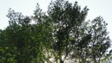Tilt Shot Of Trees While Wind Blows And Sun Shines stock footage