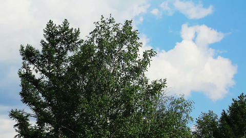 Timelapse with tree and clouds in summer Stock Video Footage