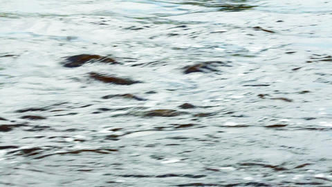 Fast flow of river water Stock Video Footage