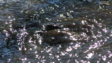 Water flows out of the ground Stock Video Footage