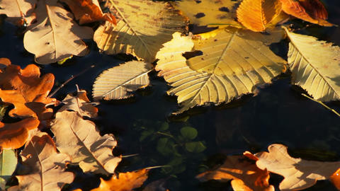 Autumn leaves on water Footage