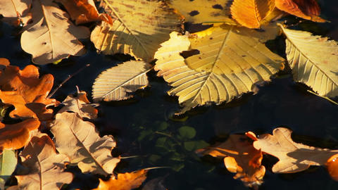 Autumn leaves on water Stock Video Footage