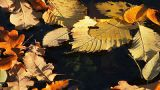 Autumn Leaves On Water stock footage