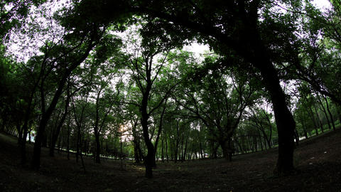 Sunset in the city park fisheye view, timelapse Stock Video Footage
