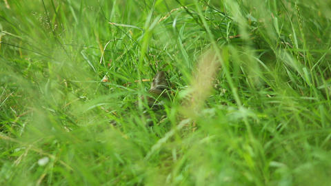 Bird in grass Stock Video Footage