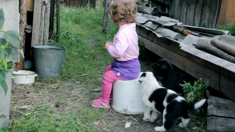 little kid playing with puppies Stock Video Footage