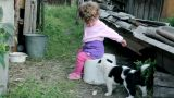 Little Kid Playing With Puppies stock footage
