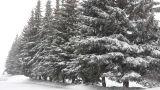 snowfall in winter park Footage
