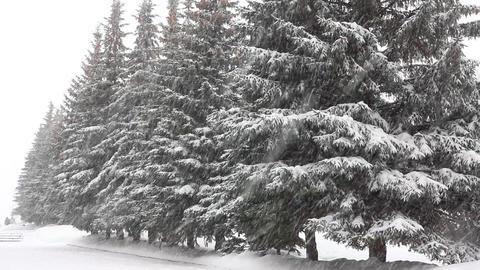 snowfall in winter park Stock Video Footage