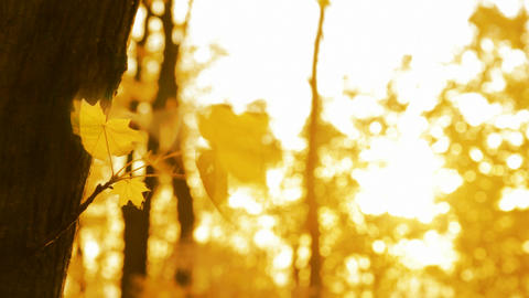 yellow leaf on autumn trees in wind Stock Video Footage