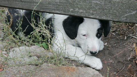 homeless puppy Stock Video Footage