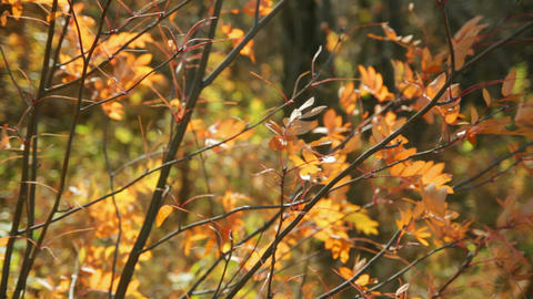 autumn yellow leaves Stock Video Footage