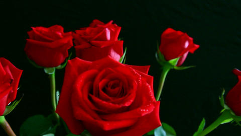 red rose with water drops whirling on black Stock Video Footage