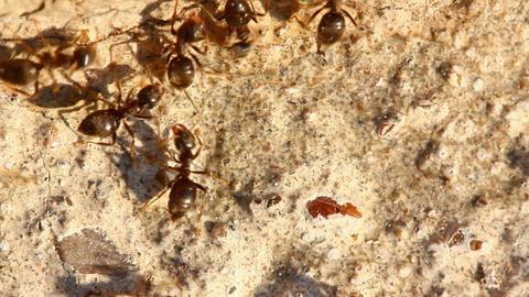 ants macro Live Action