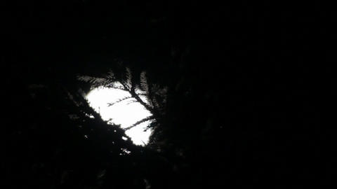 timelapse with night fir and moon between clouds Stock Video Footage