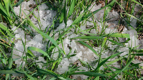 green grass and melting snow Stock Video Footage