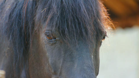 horse eyes Stock Video Footage