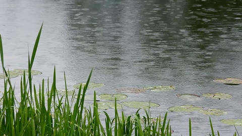 lake and rain Stock Video Footage