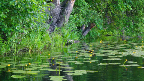 summer lake in forest Stock Video Footage