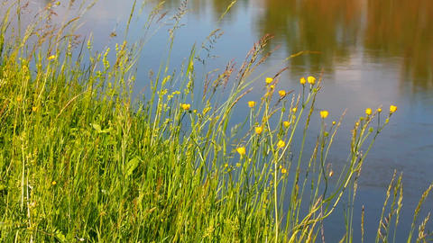 summer grass on riverside Stock Video Footage