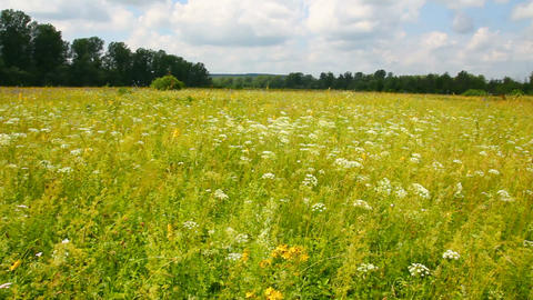 pan landscape with summer meadow Stock Video Footage