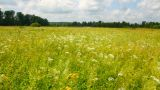 pan landscape with summer meadow Footage
