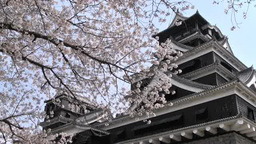 Kumamoto Castle and cherry blossoms Footage