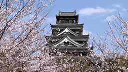 Hiroshima Castle and cherry blossoms Footage