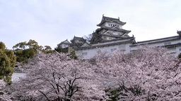 Himeji Castle and cherry blossoms Footage