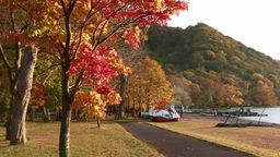 The lakeshore of Lake Towada with fall colors Footage