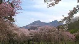 サクラと駒ヶ岳 Footage
